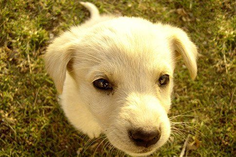 Developing Emotional Intelligence in Puppies