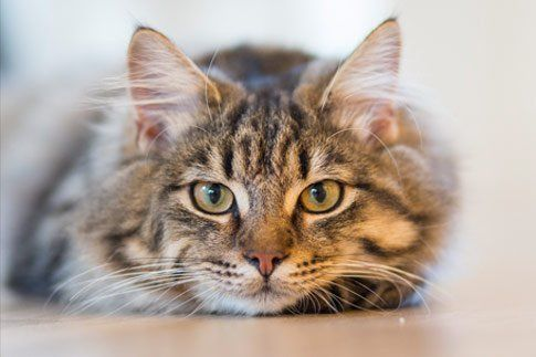 Common Cancers in Cats – Not a dog's tale